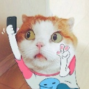 爱自拍的猫咪 - 橙光