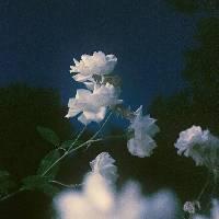 彻夜诗人 - 橙光