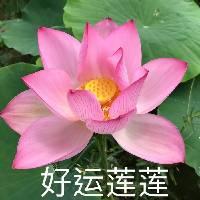 葵笙九月007 - 橙光
