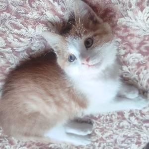 凯蒂猫258 - 橙光