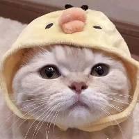 猫的故居 - 橙光