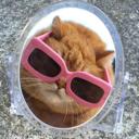 撸猫君 - 橙光