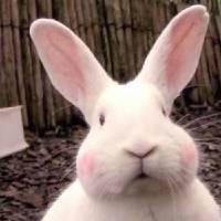 胖兔酱 - 橙光