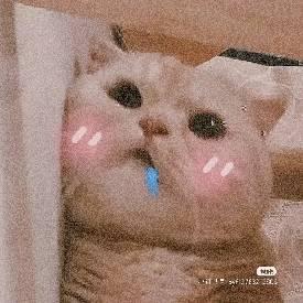 肥公子mini - 橙光