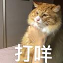 animal小日子 - 橙光